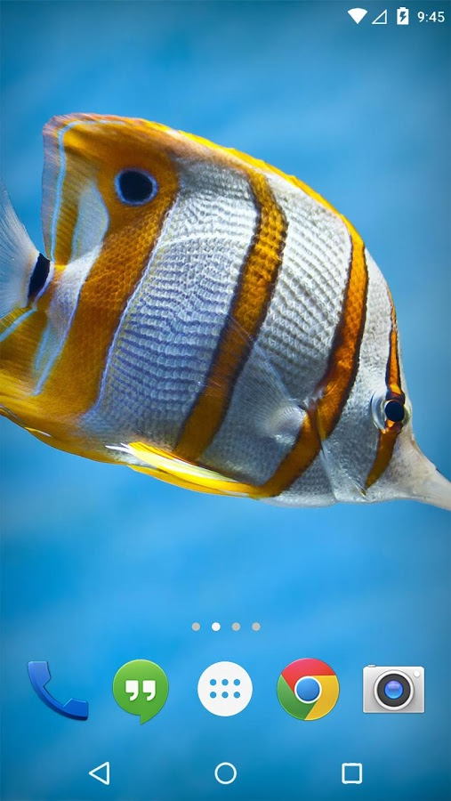 Flora Coral Fish 3d Live Wp 187 Apk Thing Android Apps