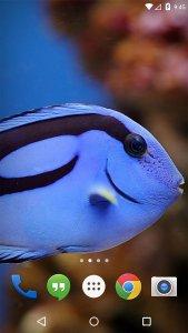 Flora Coral Fish 3D Live WP