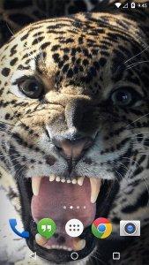 Tiger Lion Cheetah LWP