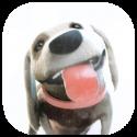 Puppy Licks Screen Animation
